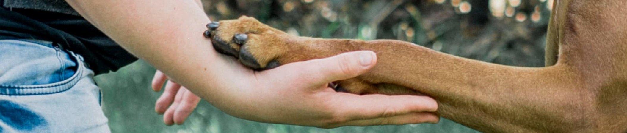 hondenpoot-in-hand